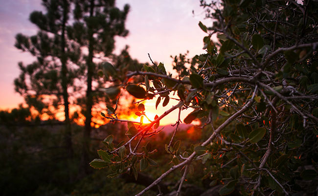 Sunset at Angeles Crest
